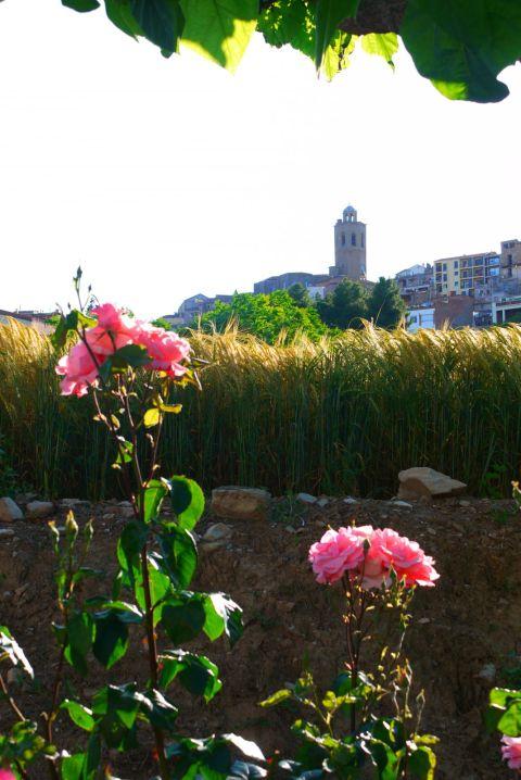 temps flors 12