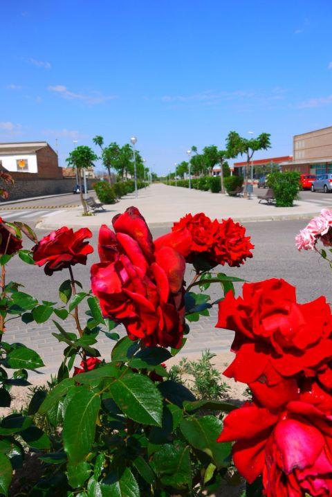 temps flors 13