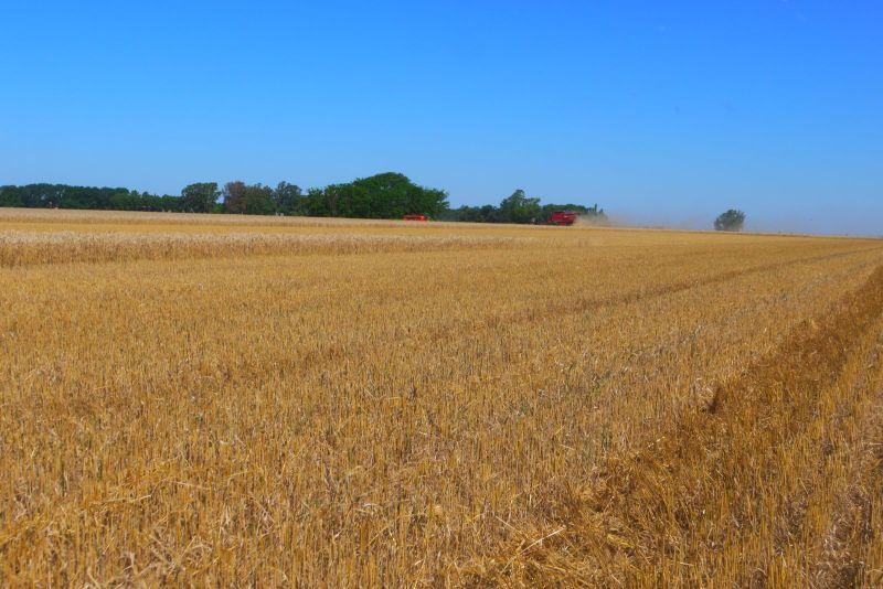 camps de blat