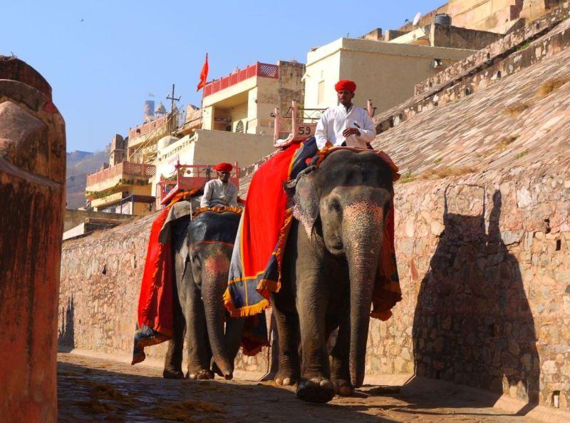 elefant bona