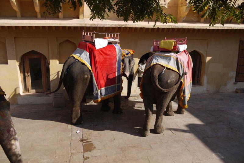 parella elefants