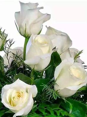 roses tresa